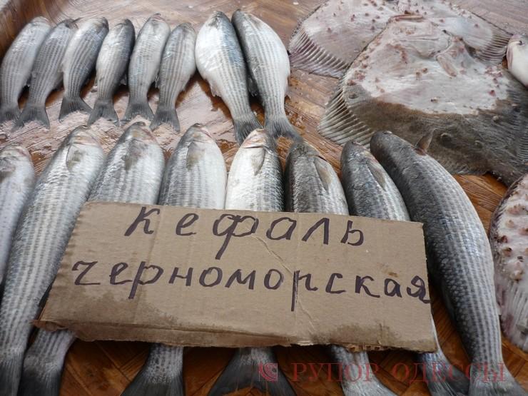 крым ловля рыбы кефаль