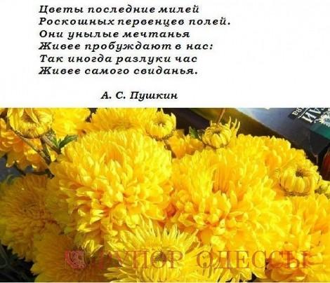 Цветы последние